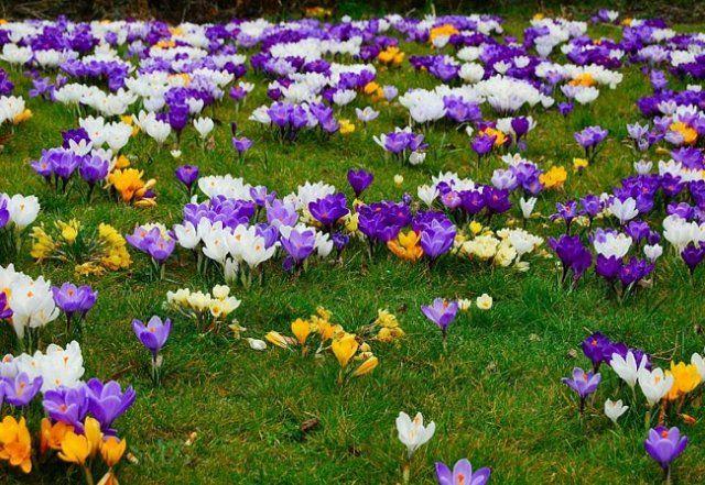 3565212 Желтые маленькие цветочки название — Все цветы
