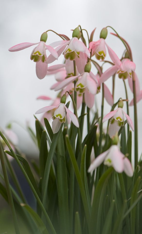 5435029-578x723 Цветы для клумбы цветущие все лето низкорослые