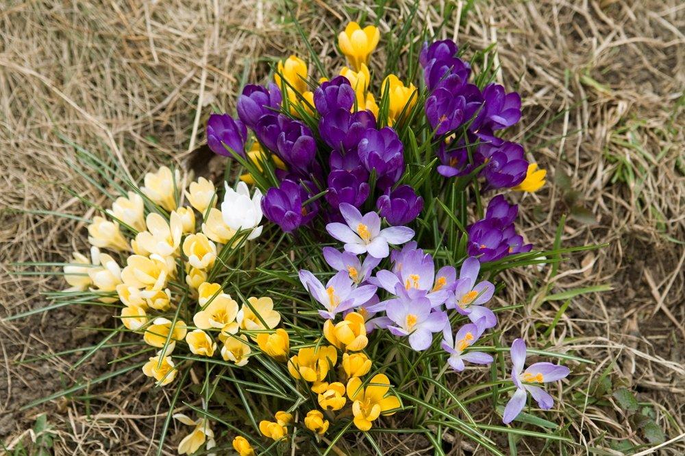 Mayıs Ayında çiçek Açan çiçekler Nelerdir Bahçıvanların Sırları