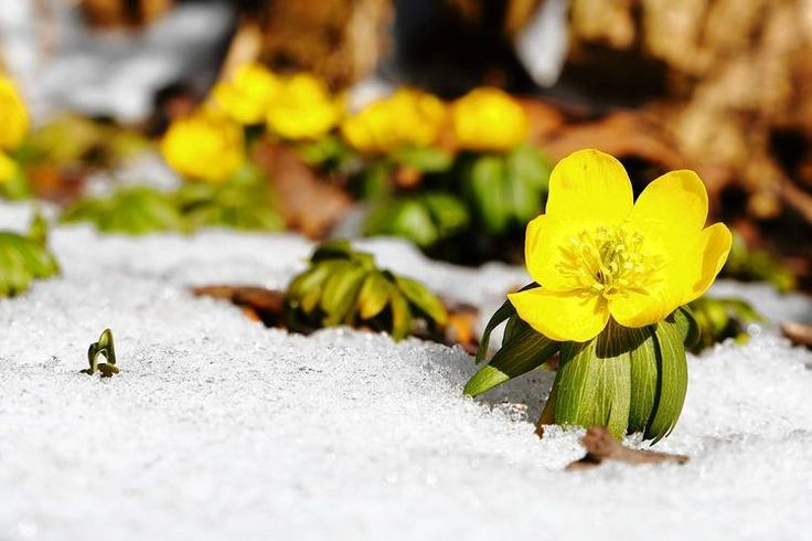 cc04c83de13d9d5d7236d99f37901de Желтые маленькие цветочки название — Все цветы