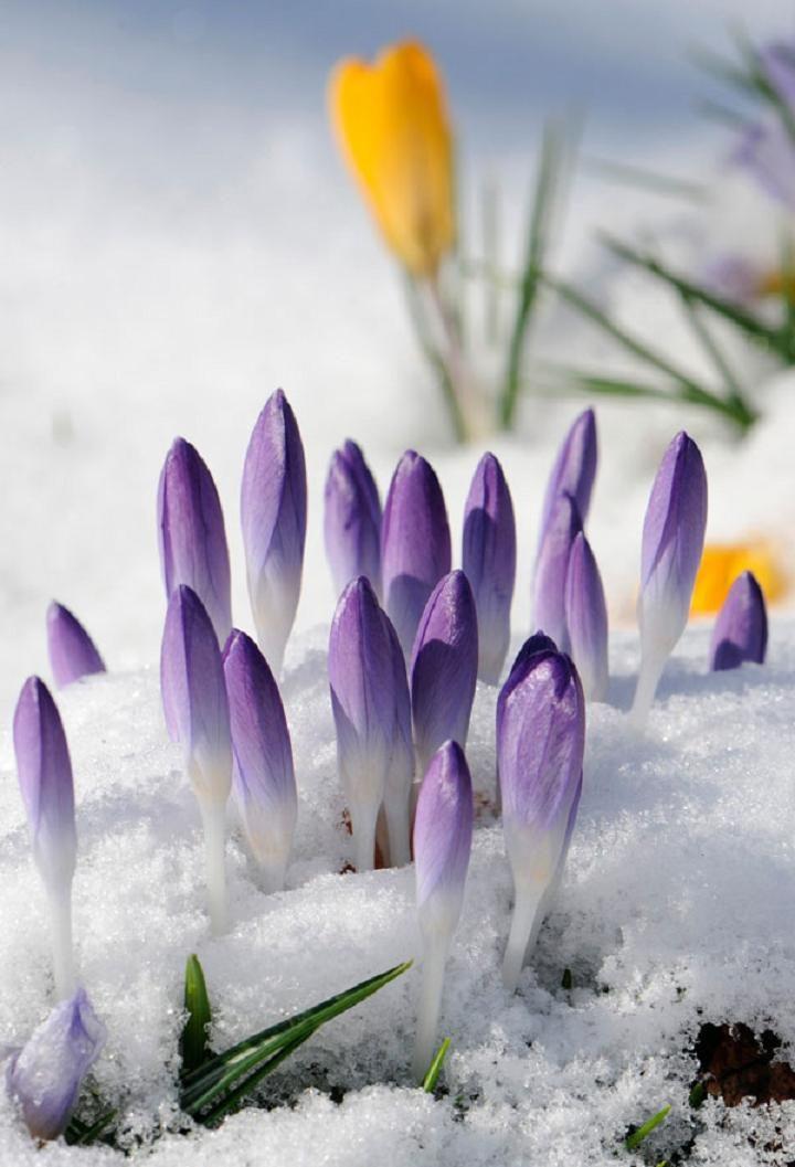 e2e25c13ccd811c879562b42fd8fe25c Желтые маленькие цветочки название — Все цветы