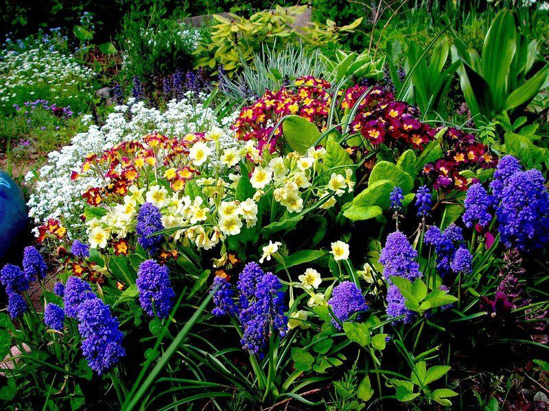 fepiccocdf86 Цветы для клумбы цветущие все лето низкорослые