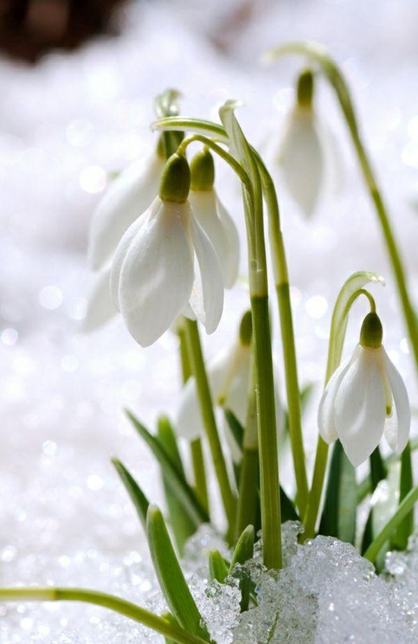 nyfile-so Цветы для клумбы цветущие все лето низкорослые