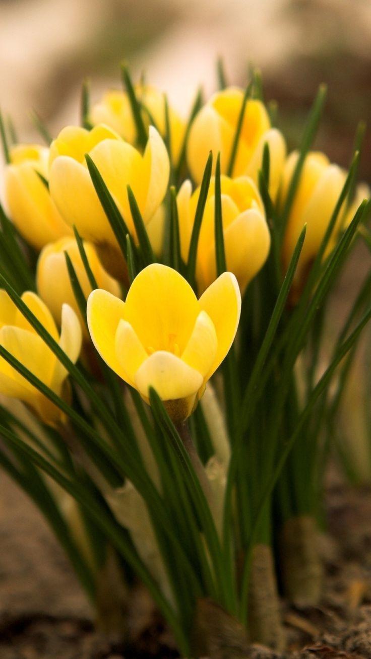 wuzimageskombb5d Желтые маленькие цветочки название — Все цветы